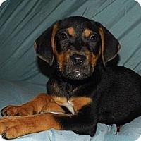 Adopt A Pet :: Jaclyn - Jarrettsville, MD