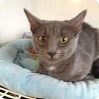 Adopt A Pet :: Tequlia - Wenatchee, WA