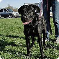 Adopt A Pet :: Trigger - Lewisville, IN