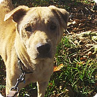 Adopt A Pet :: Chewy - Jacksonville, FL