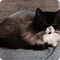 Adopt A Pet :: Buddy - Edmonton, AB