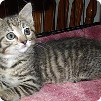 Adopt A Pet :: KATE - Acme, PA