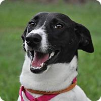 Adopt A Pet :: Ilene - Graniteville, SC