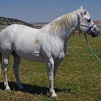 Adopt A Pet :: Misty - Hartville, WY