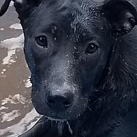 Adopt A Pet :: Katie - ST LOUIS, MO