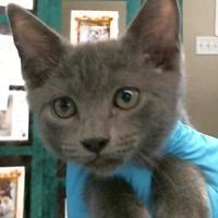 Adopt A Pet :: 653344 - Bakersfield, CA