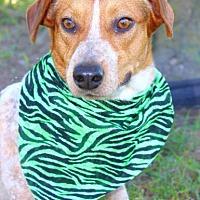 Adopt A Pet :: Skippy - Batesville, AR