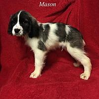 Adopt A Pet :: Mason - Chester, IL