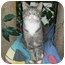 Photo 2 - Domestic Shorthair Cat for adoption in West Warwick, Rhode Island - Binky