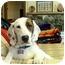 Photo 3 - Basset Hound Mix Dog for adoption in Portland, Oregon - Terra