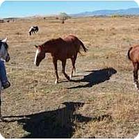 Adopt A Pet :: Kicks - Pueblo, CO