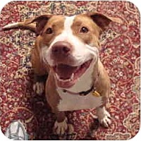 Adopt A Pet :: Tracy - Auburn, CA