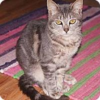 Adopt A Pet :: Takeo - Tarboro, NC