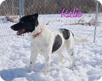 Border Collie Mix Dog for adoption in Lewisburg, West Virginia - Kalie