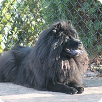 Adopt A Pet :: Koko - Tucker, GA