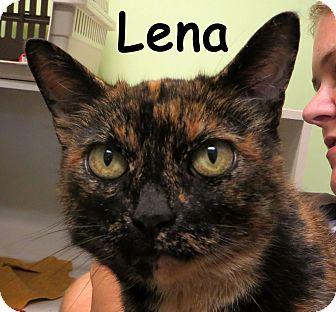 Domestic Shorthair Cat for adoption in Warren, Pennsylvania - Lena