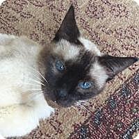 Adopt A Pet :: Jazmine - Bear, DE