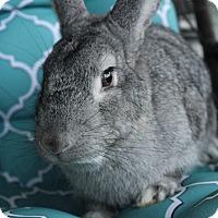 Adopt A Pet :: Cookie - Hillside, NJ