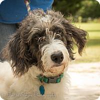 Adopt A Pet :: Cody - Daleville, AL