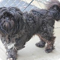 Adopt A Pet :: ZEUS - Clayton, NJ
