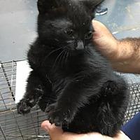 Adopt A Pet :: Pearl - Santa Paula, CA
