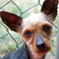 Adopt A Pet :: Kelly - New Freedom, PA