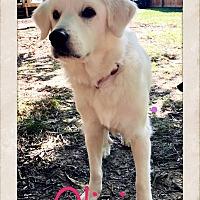 Adopt A Pet :: Olivia - Cincinnati, OH
