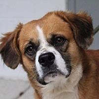 Adopt A Pet :: Ralph (TIA) - Washington, DC
