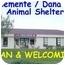 Photo 3 - Akita/Siberian Husky Mix Dog for adoption in San Clemente, California - MOLLY