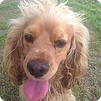 Adopt A Pet :: Leo - Oceanside, CA