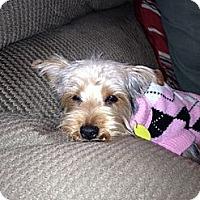 Adopt A Pet :: Abby (Michigan) - Phoenix, AZ