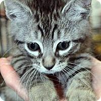 Adopt A Pet :: Nicholas - Clinton, LA