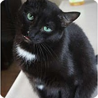 Adopt A Pet :: Spicey - Xenia, OH