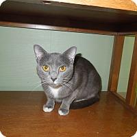 Adopt A Pet :: Suzette - Medina, OH