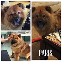 Adopt A Pet :: PARIS - Dix Hills, NY
