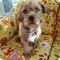 Adopt A Pet :: Herbie - Knoxville, TN