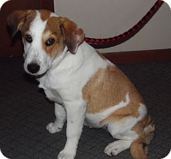 Collie Mix Dog for adoption in Owatonna, Minnesota - Billy