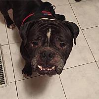 Adopt A Pet :: Rocko - Decatur, IL