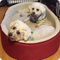 Adopt A Pet :: Juliet & Romeo - East Hanover, NJ