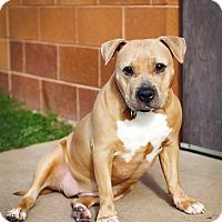 Adopt A Pet :: Mocha *Foster* - Appleton, WI
