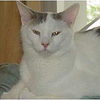 Adopt A Pet :: Jack - Watkinsville, GA