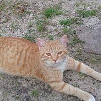 Adopt A Pet :: Sammy - Garner, NC