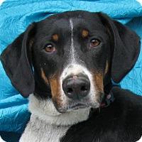 Adopt A Pet :: Dexter - Cuba, NY