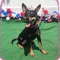 Adopt A Pet :: TANDEE - Marietta, GA