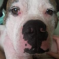 Adopt A Pet :: Gordie - Villa Park, IL