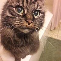 Adopt A Pet :: Rosie - Budd Lake, NJ