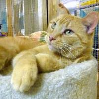 Adopt A Pet :: Toby II - Westville, IN