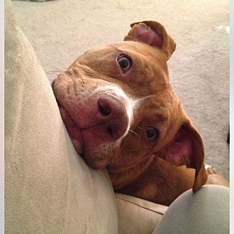 Pit Bull Terrier Mix Dog for adoption in Columbus, Ohio - Ruby