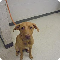 Adopt A Pet :: Arrow - Gulfport, MS