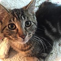 Adopt A Pet :: Jake -Adoption Pending! - Colmar, PA